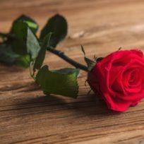 Rosa con tallo preservada* (Eterna) en estuche de acetato - LOVERSpack
