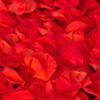 Bolsa de 50 Pétalos de Rosa Preservados (eternos) - LOVERSpack